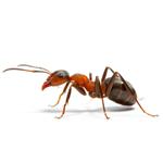 Phobi Dose Ready To Use Bed Bug Killer