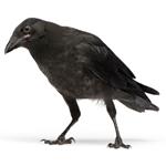 BirdXPeller Pro Digital 1-Channel Bird Scarer Version 2