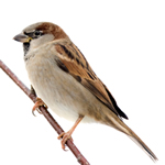 Sparrow Netting 19mm