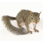 Defenders Squirrel Cage Trap STV088